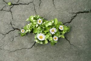 Hope-vs-Faith